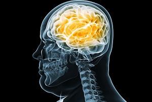 I neuroni periferici che controllano l'obesità