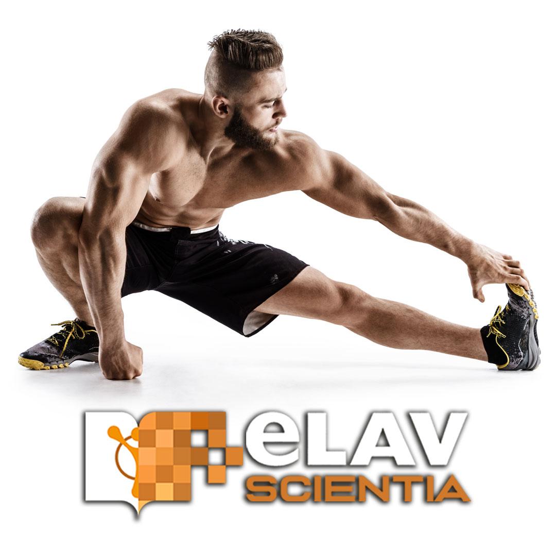 Risposte Dei Nervi Periferici Allo Stretching Muscolare