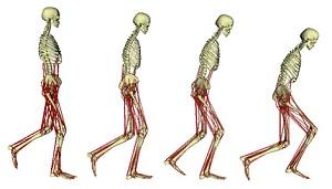 La meccanica dell'anca alla base dell'allenamento di potenza degli arti inferiori - Indurre un aumento della velocità di andatura in soggetti anziani: Potsdam Gait Study (POGS)