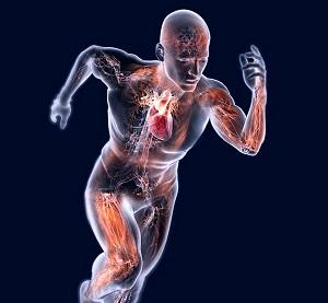 Esercizio aerobico: un toccasana per il cervello