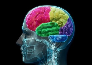 L'adolescenza: un'età sensibile sullo sviluppo cerebrale