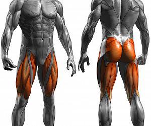 La massa muscolare è un fondamentale indice di previsione del grasso intramuscolare indipendentemente dall'età
