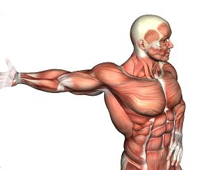 Attività del muscolo serrato anteriore e del muscolo trapezio inferiore durante esercizi isotonici multiarticolari per la scapola e contrazioni isometriche