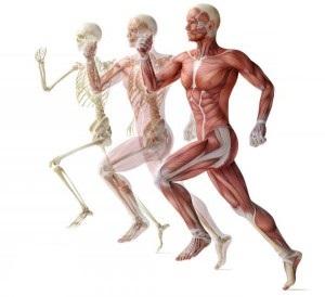 Risposte biomeccaniche, metaboliche e cardiopolmonari di corridori durante corsa a diverse velocità