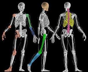 Controllo posturale dinamico in atlete e soggetti non allenati in seguito ad un protocollo di affaticamento