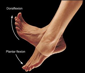 Variazioni della motilitàarticolare e dell'unitàdi rigidità muscolo-tendinea dopo diverse quantità di stretching dinamico.